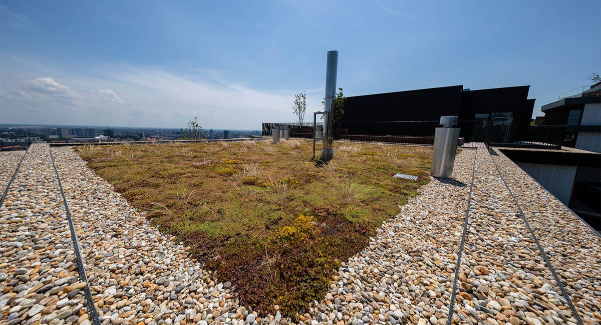 Gansberg tráva na streche - ise